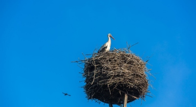 storch-nest-elbe-2